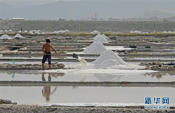 #(社會)(3)福建泉州:防禦臺風 搶收原鹽