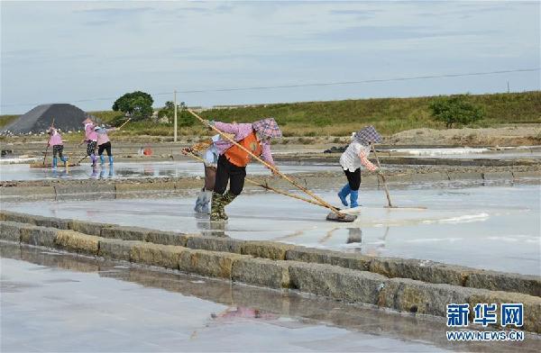 #(社會)(4)福建泉州:防禦臺風 搶收原鹽