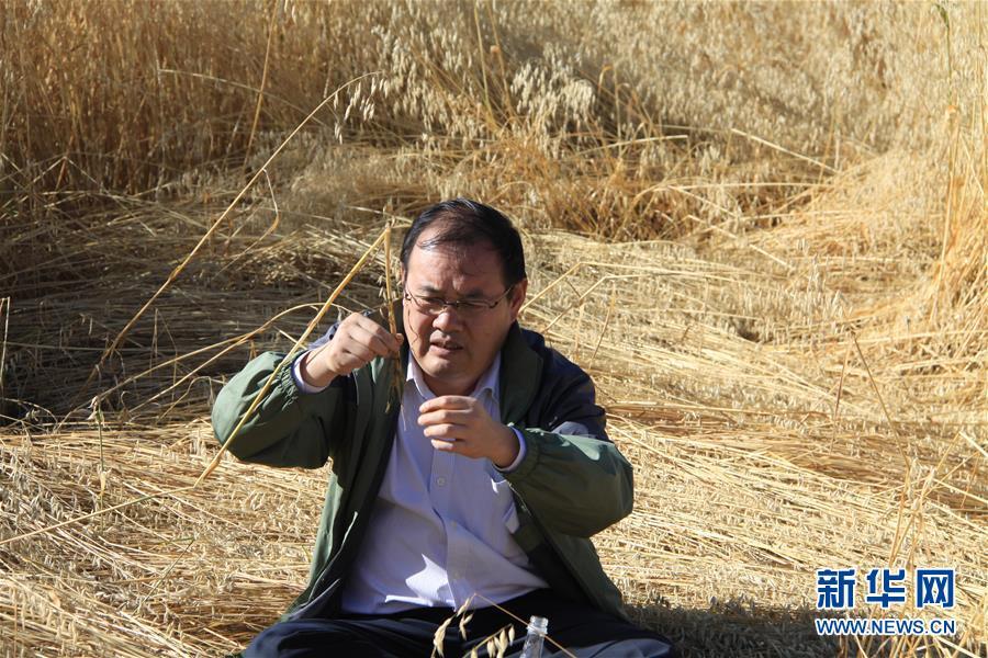 (新時代擔當作為典型·圖文互動)(1)草地生態專家趙新全:情深不舍三江源