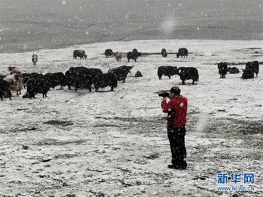 (新時代擔當作為典型·圖文互動)(3)草地生態專家趙新全:情深不舍三江源