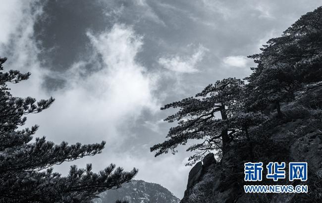 一场春雨过后,安徽黄山风景区云海弥漫,宛如一幅淡雅的水墨画 .