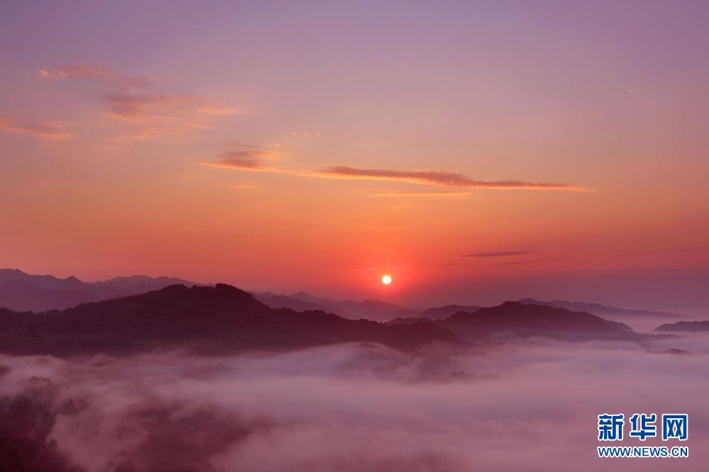 8月24日,在安徽齐云山风景区拍摄的日出云海.