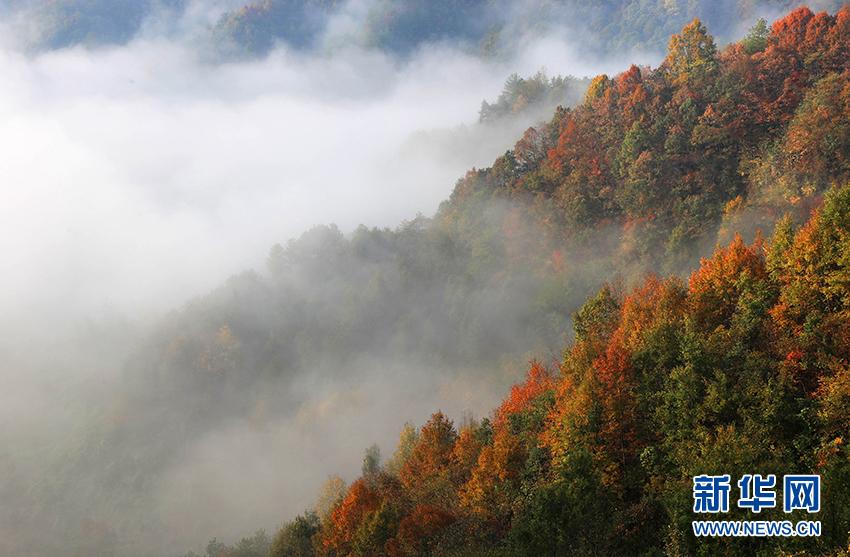 10月18日清晨,齐云山风景区秋色正浓.