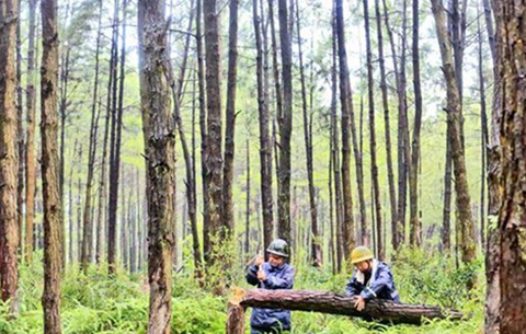 森林防火期內應遵守什麼