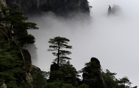 【微視頻】黃山:雲以山為體,山以雲為衣