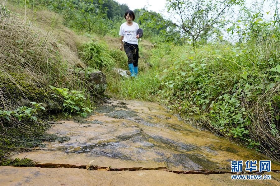 (圖片故事)(2)重慶永川:雨中逆行者 守護百姓安全的地質災害監測員