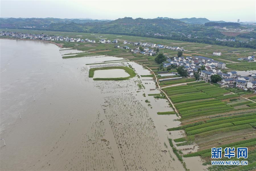 (防汛抗洪)(3)重慶潼南迎來過境洪水