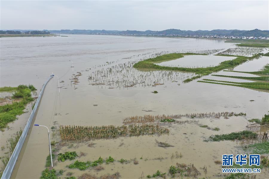 (防汛抗洪)(4)重慶潼南迎來過境洪水