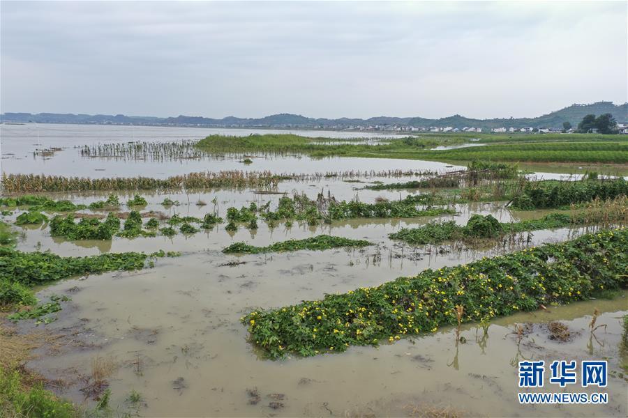 (防汛抗洪)(5)重慶潼南迎來過境洪水