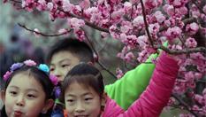 中國梅花之鄉舉行梅花節