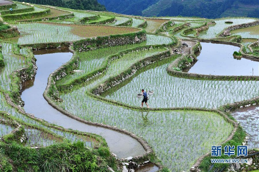 (脫貧攻堅)(1)貴州從江:播下種螺助增收