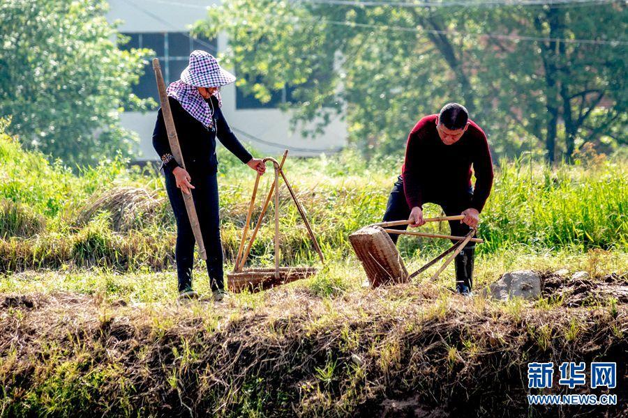 河南商城:整理水田 准备插秧