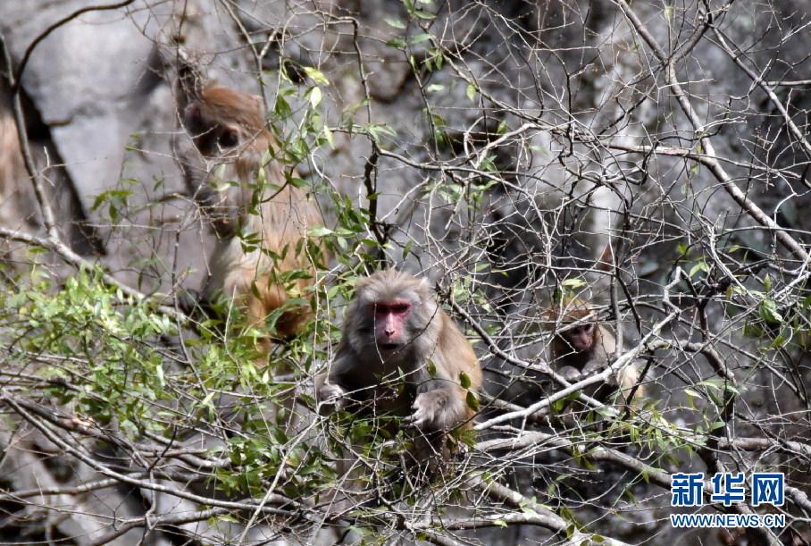 神农架首次在阳日镇银川湖发现野生猕猴到兰州武山攻略图片
