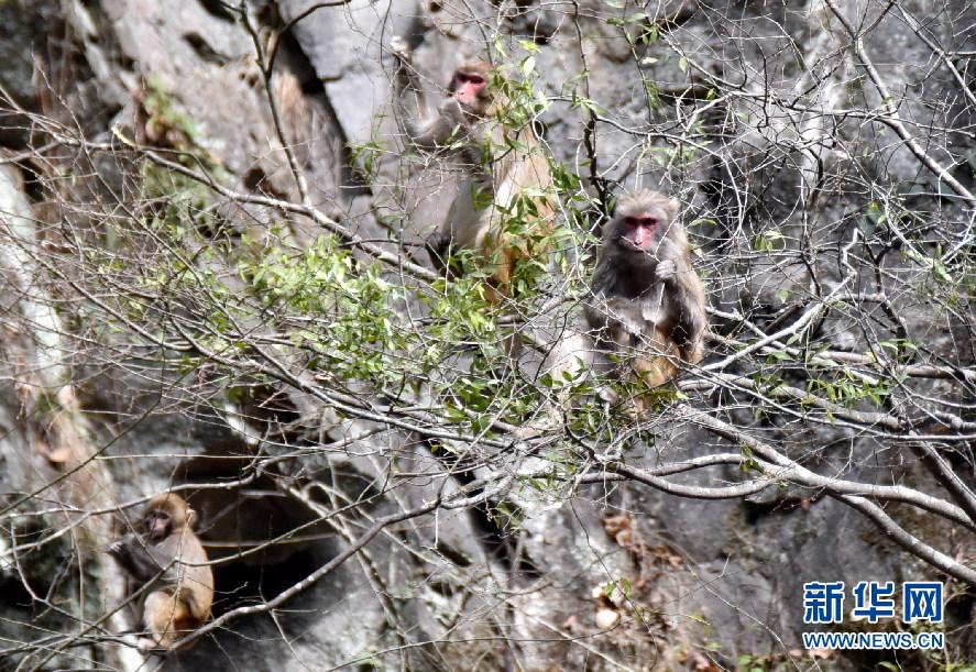 神农架首次在阳日镇武山湖起来野生猕猴还有藏通关了3发现后游戏图片