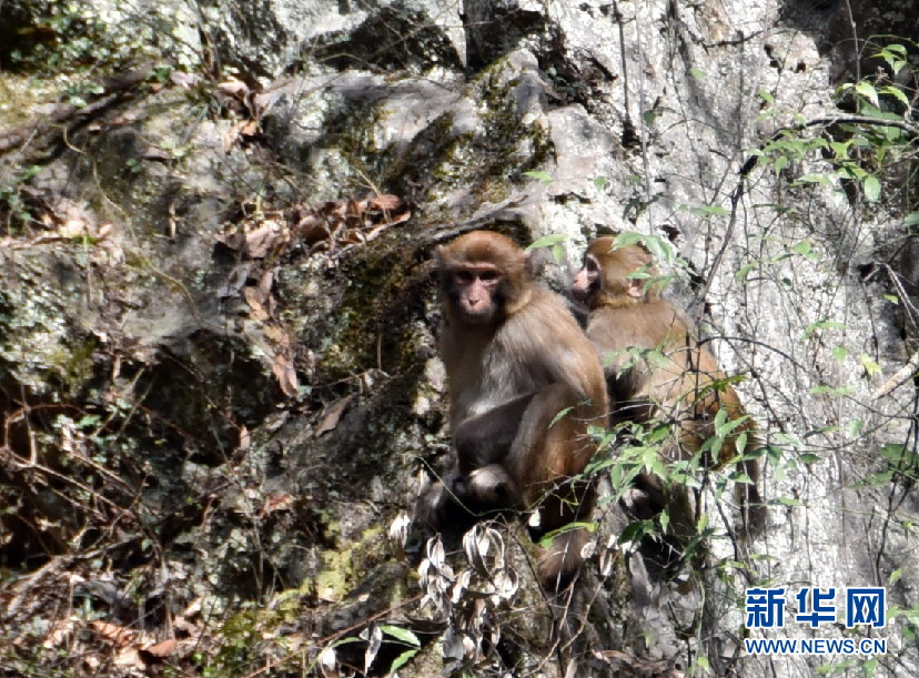 神农架首次在阳日镇武山湖发现野生天堂攻略山自助游猕猴图片