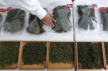 安徽黃山:徽州民間鬥茶香