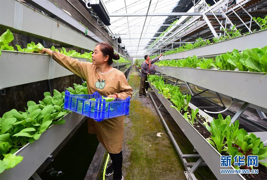 #(經濟)(1)河北靈壽:現代農業助力脫貧攻堅