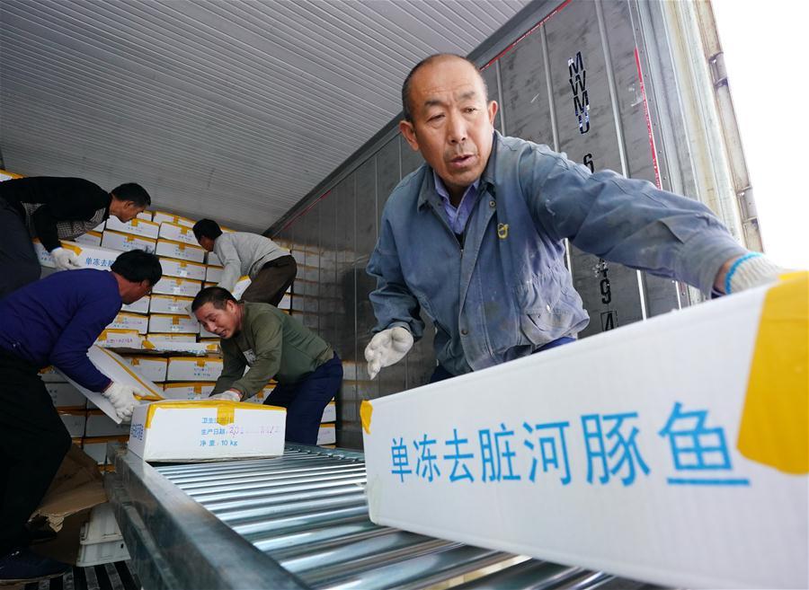 (經濟)(1)河北曹妃甸:河豚魚加工忙