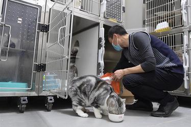 """武漢:動物醫院裏的臨時""""奶爸"""""""