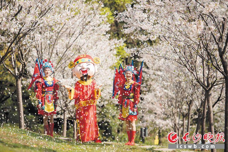游客可以在世界之窗体验富士山同款樱花,感受春日里的美好。黄启晴 摄
