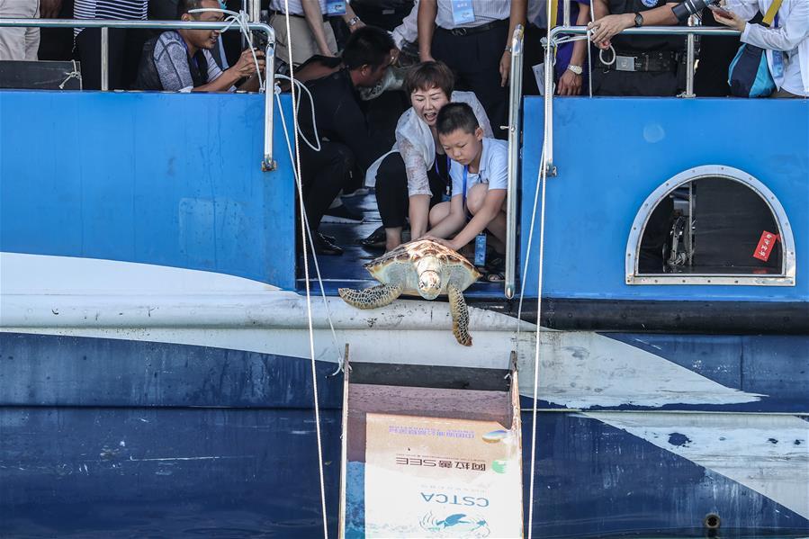 海南陵水舉行2020年南海海龜放流活動