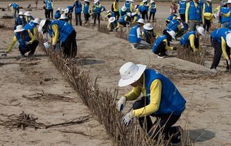 大學生志願者在內蒙古治沙