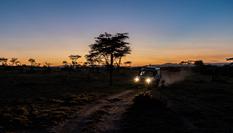 與獅同行——東非草原上的中國追夢人