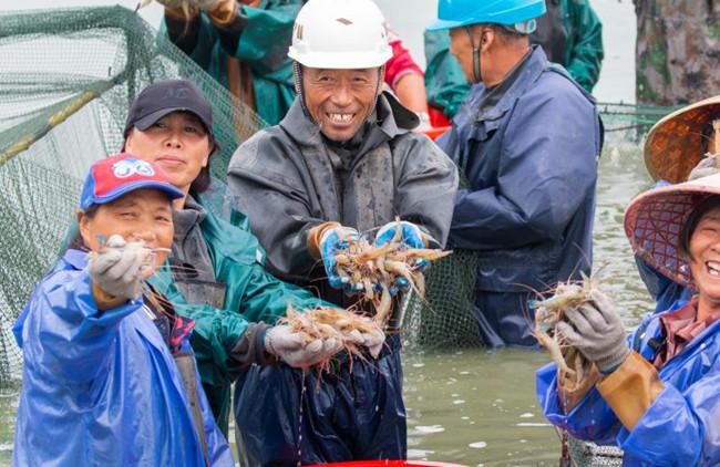 視頻|龍虬一只蝦 拼出富民大産業