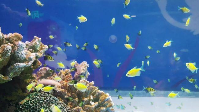 海獅攜手天使魚 南京海底世界花式迎雙節