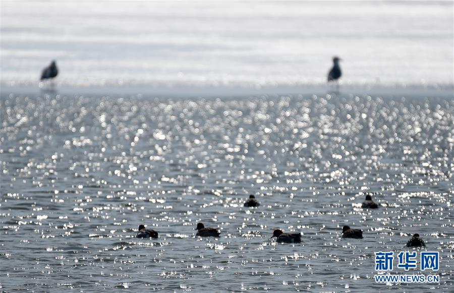 (環境)(1)中俄界湖興凱湖:鴨戲春水 鷺舞寒冰