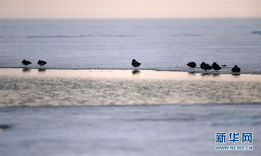 (環境)(2)中俄界湖興凱湖:鴨戲春水 鷺舞寒冰