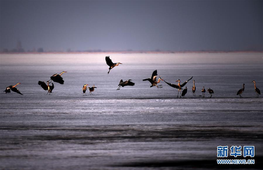 (環境)(3)中俄界湖興凱湖:鴨戲春水 鷺舞寒冰