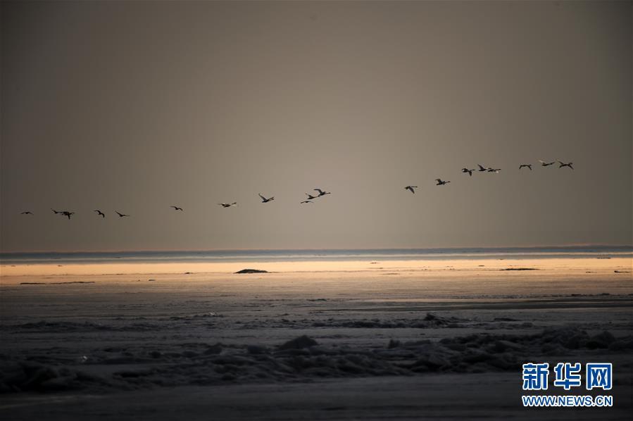 (環境)(5)中俄界湖興凱湖:鴨戲春水 鷺舞寒冰