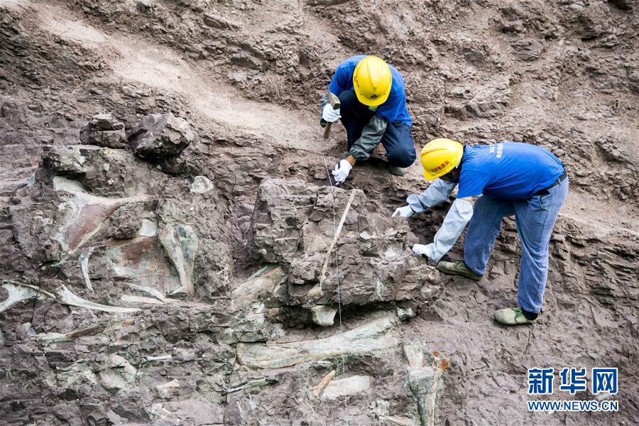 (科技)(1)重慶雲陽發現世界級恐龍化石群