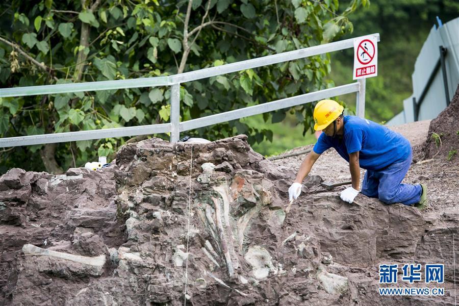 (科技)(2)重慶雲陽發現世界級恐龍化石群