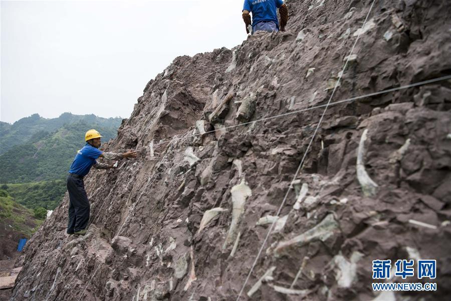 (科技)(3)重慶雲陽發現世界級恐龍化石群