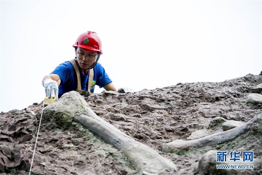 (科技)(4)重慶雲陽發現世界級恐龍化石群