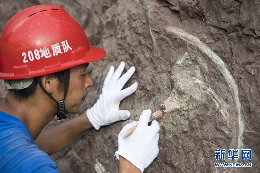 (科技)(5)重慶雲陽發現世界級恐龍化石群