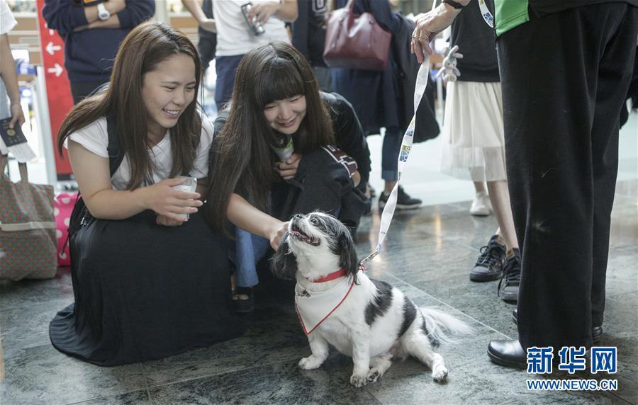 (國際)(3)溫哥華機場引入寵物狗助旅客減壓