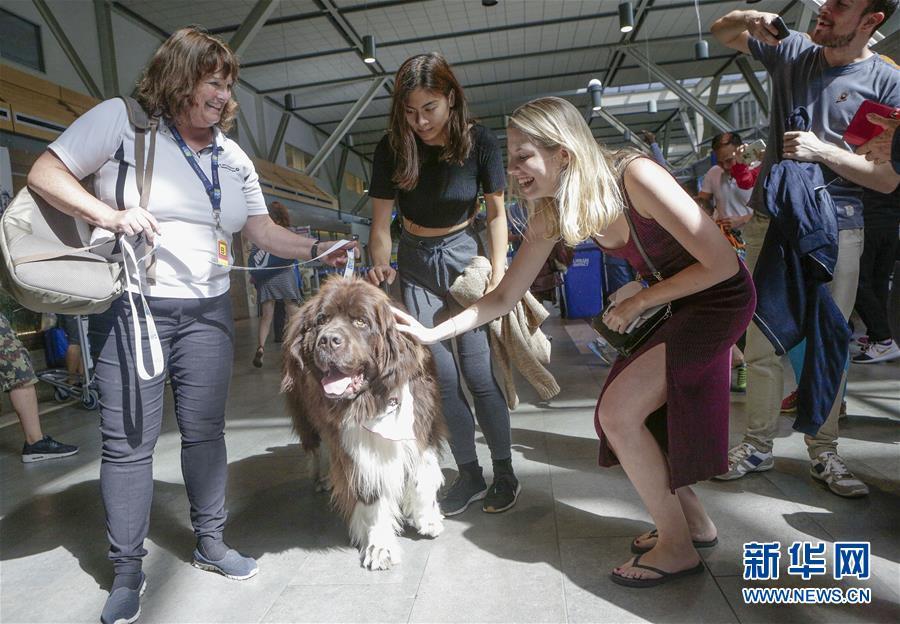 (國際)(2)溫哥華機場引入寵物狗助旅客減壓