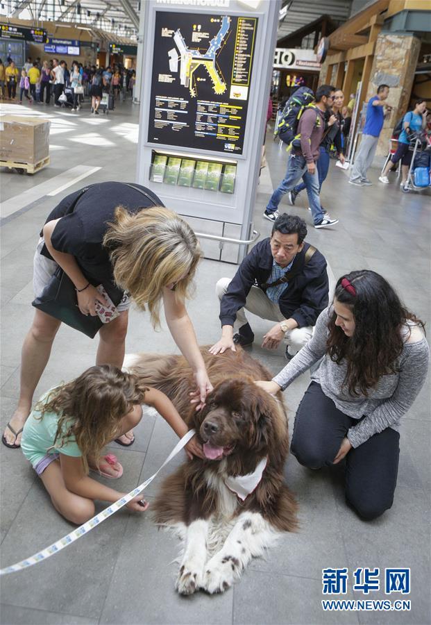 (國際)(4)溫哥華機場引入寵物狗助旅客減壓