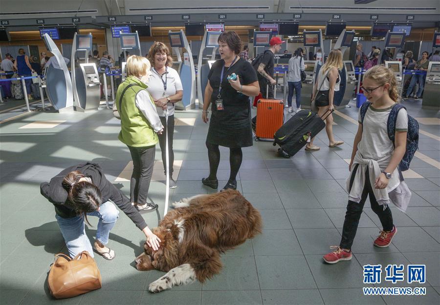 (國際)(5)溫哥華機場引入寵物狗助旅客減壓