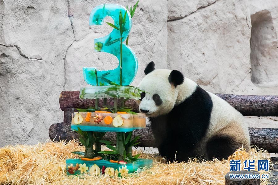 """莫斯科动物园为大熊猫""""如意""""和""""丁丁""""庆生"""