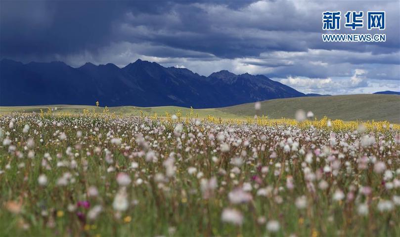 理塘县地处四川省甘孜藏族自治州西南部,大多数地区分布在海拔3600米