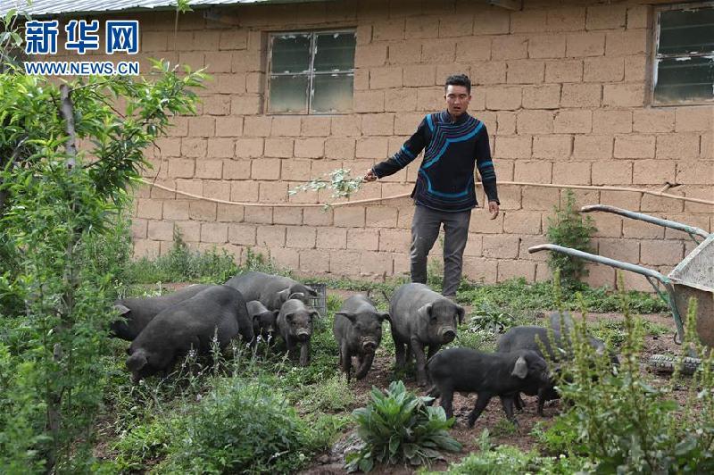 (圖片故事)(1)鄭吃合:從貧困戶到養豬專業戶