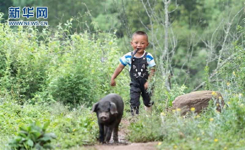 (圖片故事)(7)鄭吃合:從貧困戶到養豬專業戶