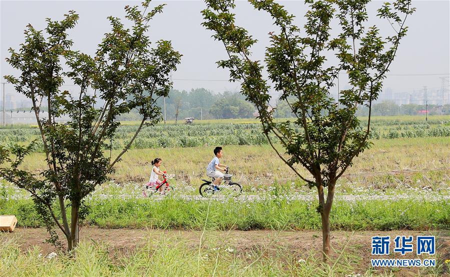 (新華視界)(1)上海:郊野公園遊興濃