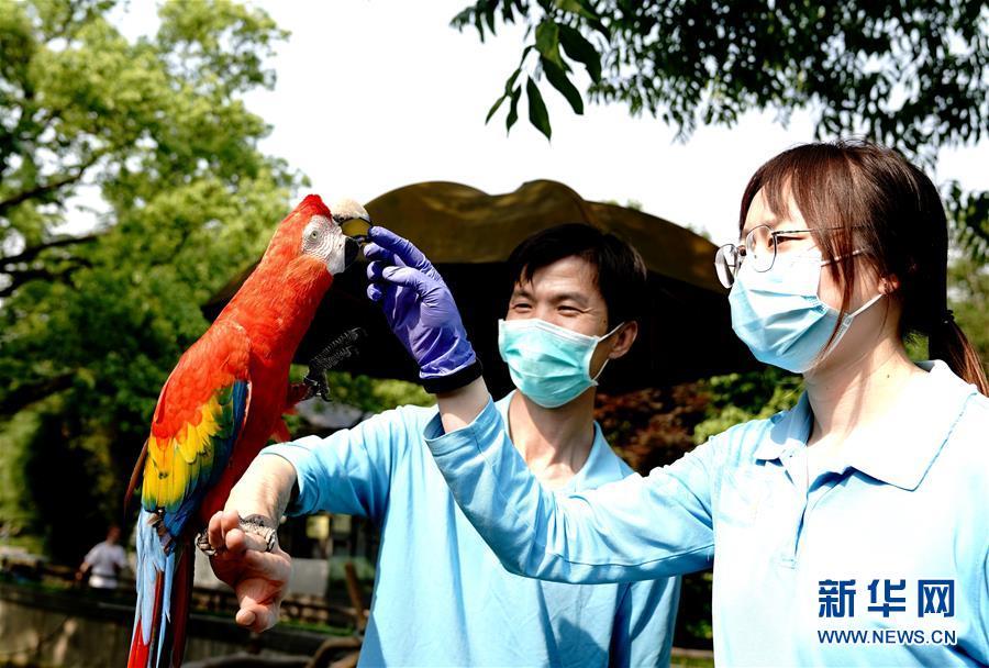 """(新華視界)(3)上海動物園:給動物""""體檢"""""""
