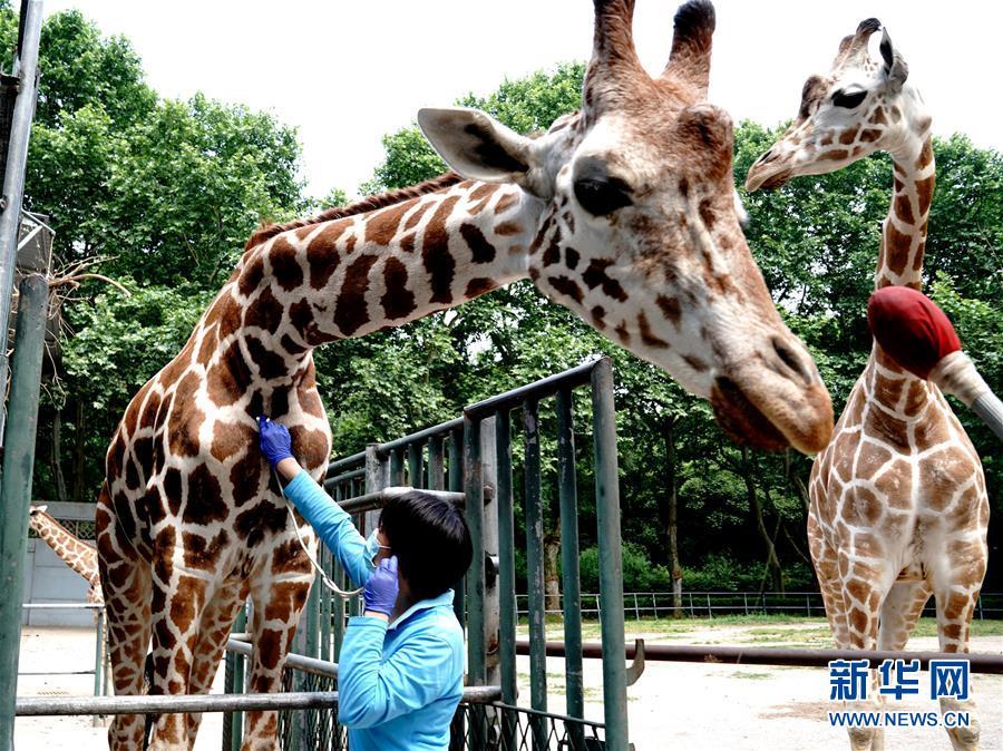 """(新華視界)(6)上海動物園:給動物""""體檢"""""""