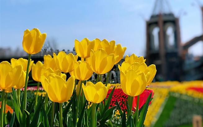 上海:花开春意浓